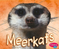 Meerkats (African Animals)