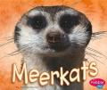 Meerkats (African Animals)