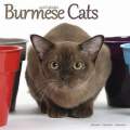Burmese Cats Calendar 2016